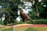 Huge bird made of topiary at Waddesdon |